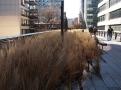 Vyvýšený park High Line představuje úžasné výhledy