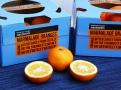Sevillské pomeranče