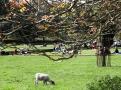 Procházky za poklidného bečení oveček