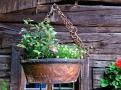 Okolo vás jsou truhlíky s květy, líně bzučí mouchy, husy a kachny se občas handrkují o místo ve stínu