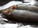 Čerstvé sardinky