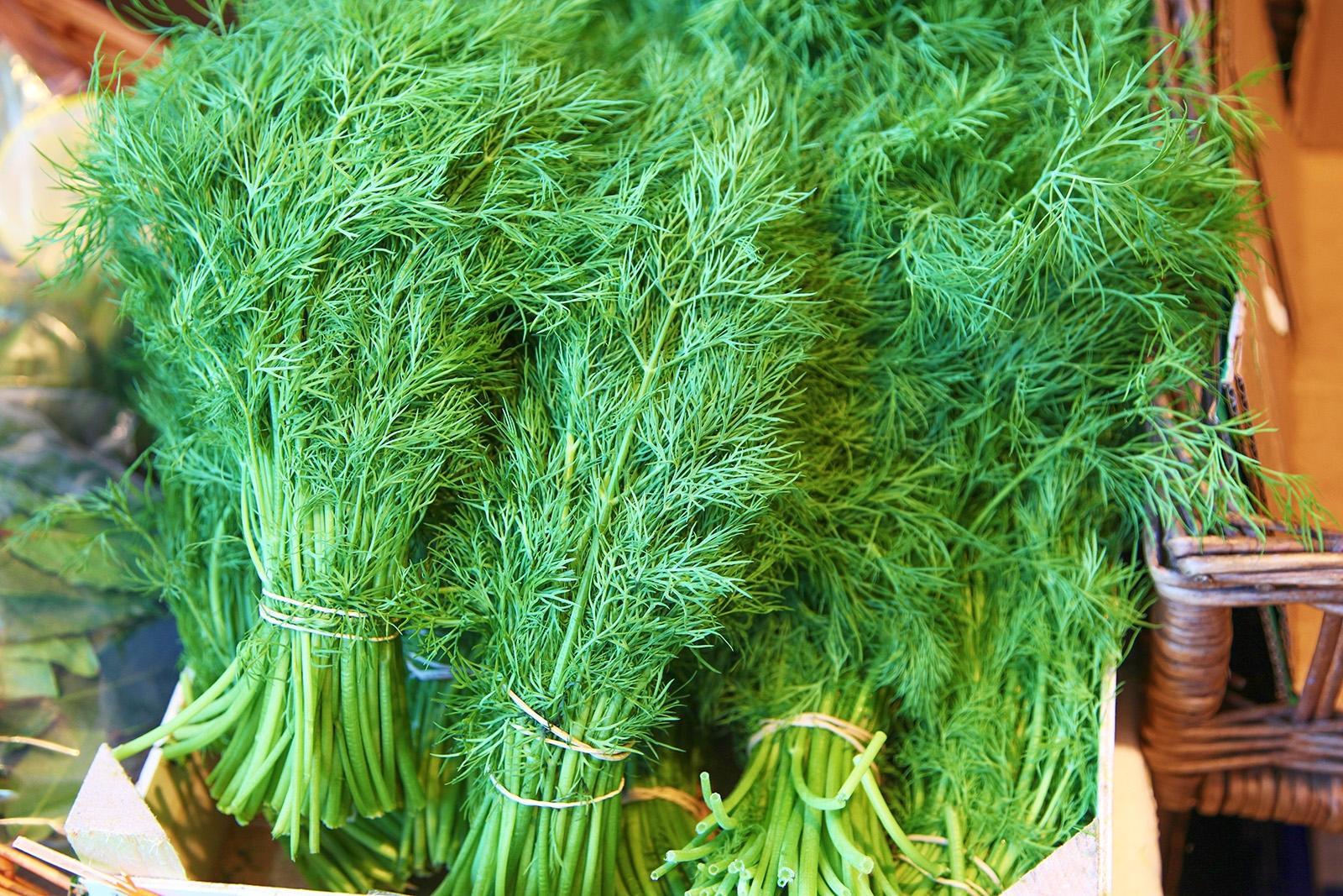 Čerstvý kopr je zdravou bylinkou s lehkou citrusovo anýzovou chutí